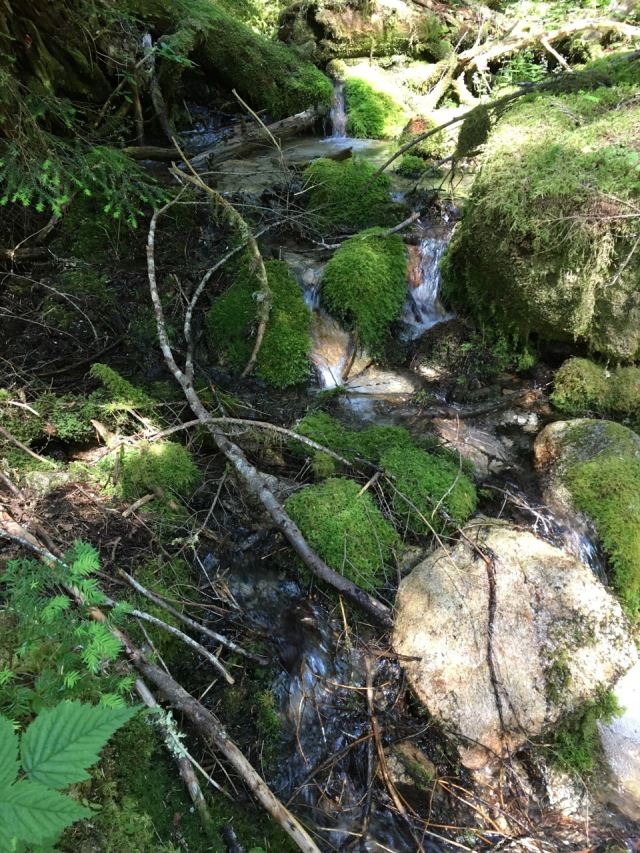 Mossy boulders on creek